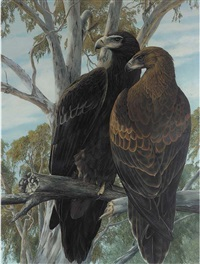 two eagles surveying their territory by james renny