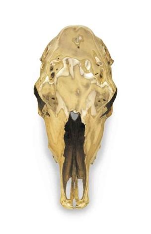 steer skull un horned by sherrie levine
