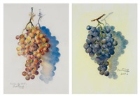 grappe de raisins bleus (+ grappe de raisins du chili; 2 works) by pierre badenier