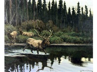 untitled (elk crossing) by matt lindstrom