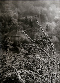 view of spring from our street by josef sudek