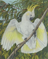 a sulphur-crested cockatoo displaying by james renny