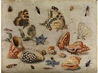 muscheln, schmetterlinge, blumen und insekten auf weissem grund by jan van kessel