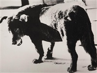 stray dog, misawa by daido moriyama