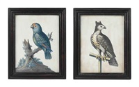 untitled (crowned eagle on a perch) (+ untitled (parrot on a branch); pair) by samuel dixon