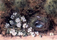 blue eggs and nest with white flowers by james hill