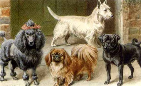 a poodle, pekingese, pug, and terrier on a step by stephen t. dadd