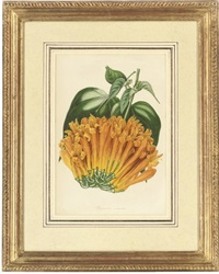 botanical studies (set of 8) by s. holden