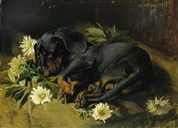 untitled - sleeping puppy by niels peter rasmussen