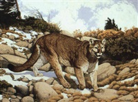 high country cougar by don rodell