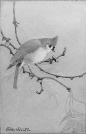 tufted titmouse by allan brooks