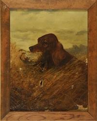 irish setter with a quail by louis contoit