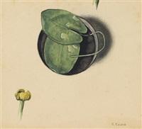 teichrose: blatt und blüte by iwan wasiljewitsch kljun