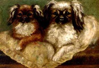 two pekingese by agnes field