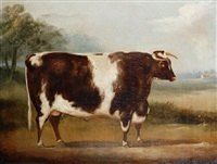 bull (study) by william henry davis