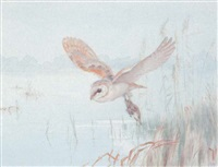 white owl by winifred marie louise austen