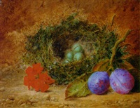 geraniums, plums and a bird's nest with eggs on a mossy bank by william h. ward