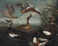 ducks in a pond by marmaduke cradock