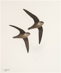 two birds in flight by james fenwick lansdowne