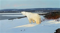 west of hudson bay by michael coleman