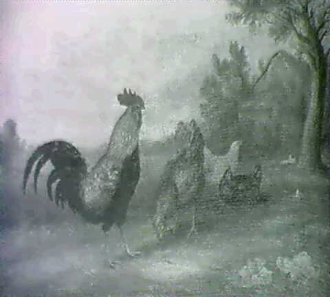 poultry in a landscape by a jackson
