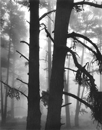 trees in fog by brett weston