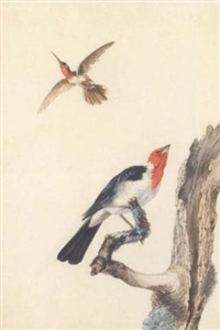 un colibri et un rouge-gorge posé sur une branche by jabes heenck