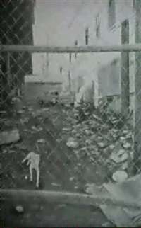 el perro blanco by dionisio rodriguez urda