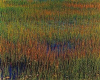 green and yellow grass, blue water by john wawrzonek