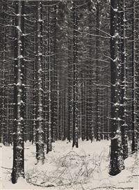 gebirgsforst (forêt de montagne) by albert renger-patzsch