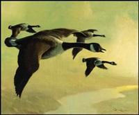 canada geese by geoffrey allan rock
