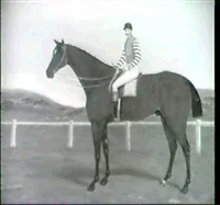 the racehorse buck jumper with jockey up by banks tomlin