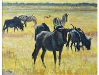 wildebeest and zebra on a plain by zakkie (zacharias) eloff