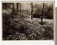 bosco fiorito by mario gabinio