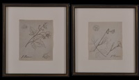 botanical studies (pair) by john flaxman