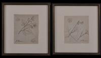 botanical studies (pair) by john flaxman