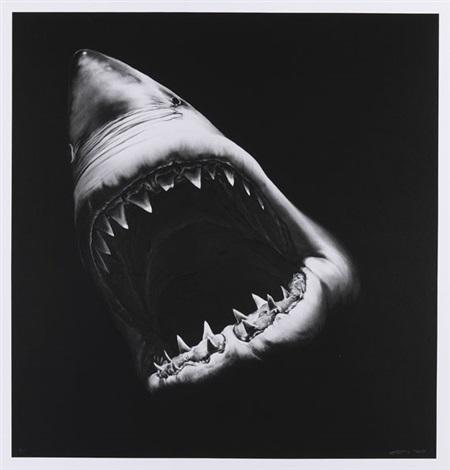 ohne titel (shark) by robert longo