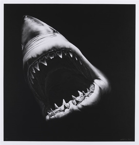 ohne titel shark by robert longo