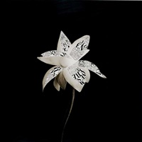 fiore by fernando andolcetti