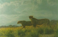 leopards by paul augustinus