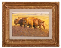 buffaloes by ned jacob