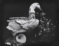 duck and lily by edward weston