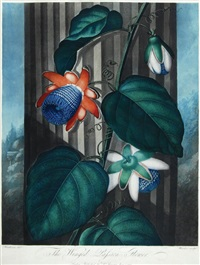 the winged passion-flower by thomas j. warner