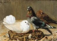 pigeons - duiven by marie van den eycken
