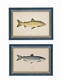 a history of the fishes of the british isles (26 works) by jonathan couch