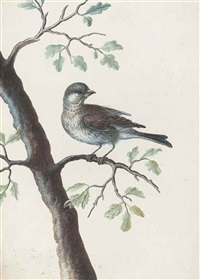a bird on an oak branch by christoph ludwig agricola
