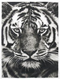 study for last tiger 4b by robert longo