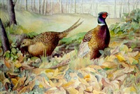 Pheasant in woodland, 1997–1997