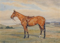barroco lass saddled, standing in a landscape by dorothy margaret alderson