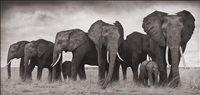 elephants resting, amboseli by nick brandt